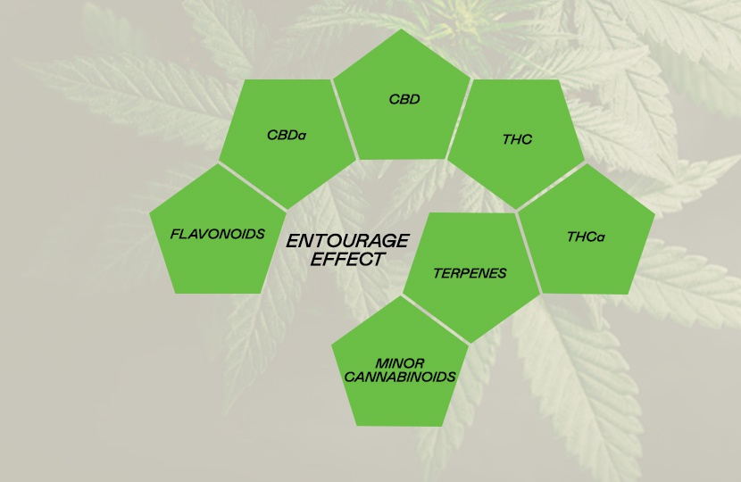 The Entourage Effect: How Terpenes Interact With Cannabinoids
