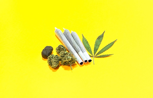 Understanding the Different Types and Strains of Cannabis